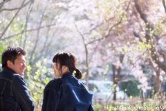 sakura lovers
